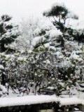 終日雪だそうな