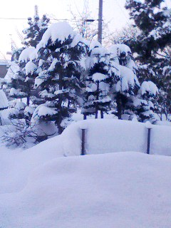 雪の夜が明けて