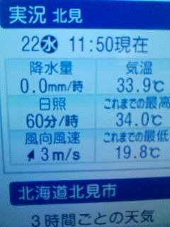 最高気温33℃って